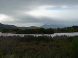 Las Gallinas Pond and Mt. Tam