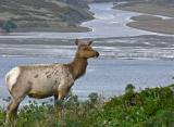 Pierce Point Ranch and Tule Elk