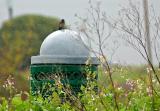 Blue Bird On Recycle Patrol