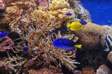 Blue and Yelllow Fish