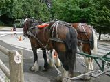 Our Horses on Vancouver, B.C. Ride