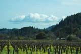 Vineyard & Cloud