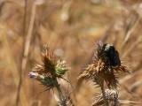 Wet Bee
