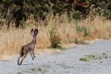 Hopping Down the Trail