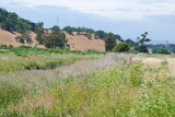 View at Las Gallinas