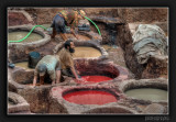 Working in the Tanneries of Fez