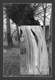 Skeletonized Willow in a Floodplain