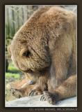 Grizzly, depressive?