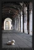 Venice, Rialto