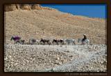 Mule Treck above Deir el Bahri