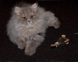 Simba - our new kitten