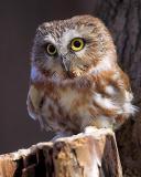Furby or Owl?
