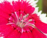 Flower & Critter