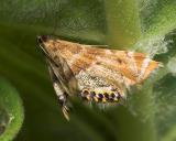Hidden Moth