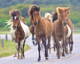 Ponies on the run