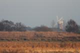 Stubb Mill Raptor Roost