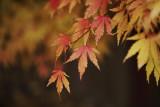 Autumn Falling