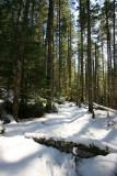 1Snowy Trail.jpg