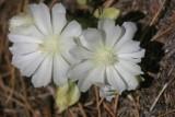 Desert Blooms.jpg