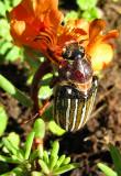 Freaking Bug