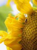 Pollenation.jpg