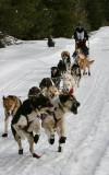 Sixteen Dogs