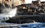 Sea Lion Beach