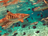 Fast Motion Sharks