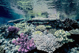 Fiji Underwater/Nikonos