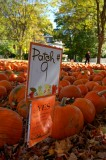 Pumpkin Patch #9