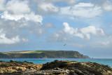 Nare headland from near Portscatho