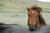 The Wild Horses of Theodore Roosevelt National Park