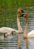 Seney National Wildlife Refuge