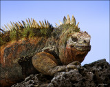 Mammals, reptiles and other critters in the Galapagos