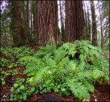 Lone Maple Picnic Area