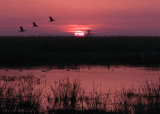 Sunrise at Merced NWR