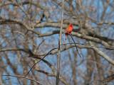 2009-02-09 Cardinal