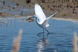 Assateague Island National Park