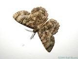 2009-07-02 Moth