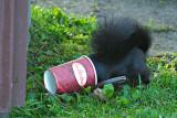 2009-08-31 Caffeine