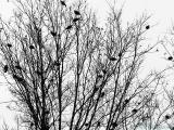 2006-01-09 Flocking
