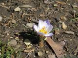 2006-03-16 Bloom