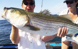 Striped Bass - Montauk,  July 2009