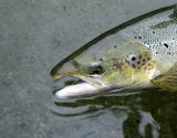 Gaspé Atlantic Salmon Trip -  Sept 2006