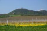 Vineyard 2009