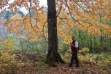 Porcupine Mountains Wilderness
