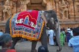 Elephant Greeting Visitors