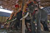 Patient Elephants