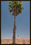07 Palm.jpg