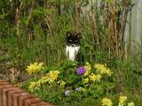Babie in the garden
